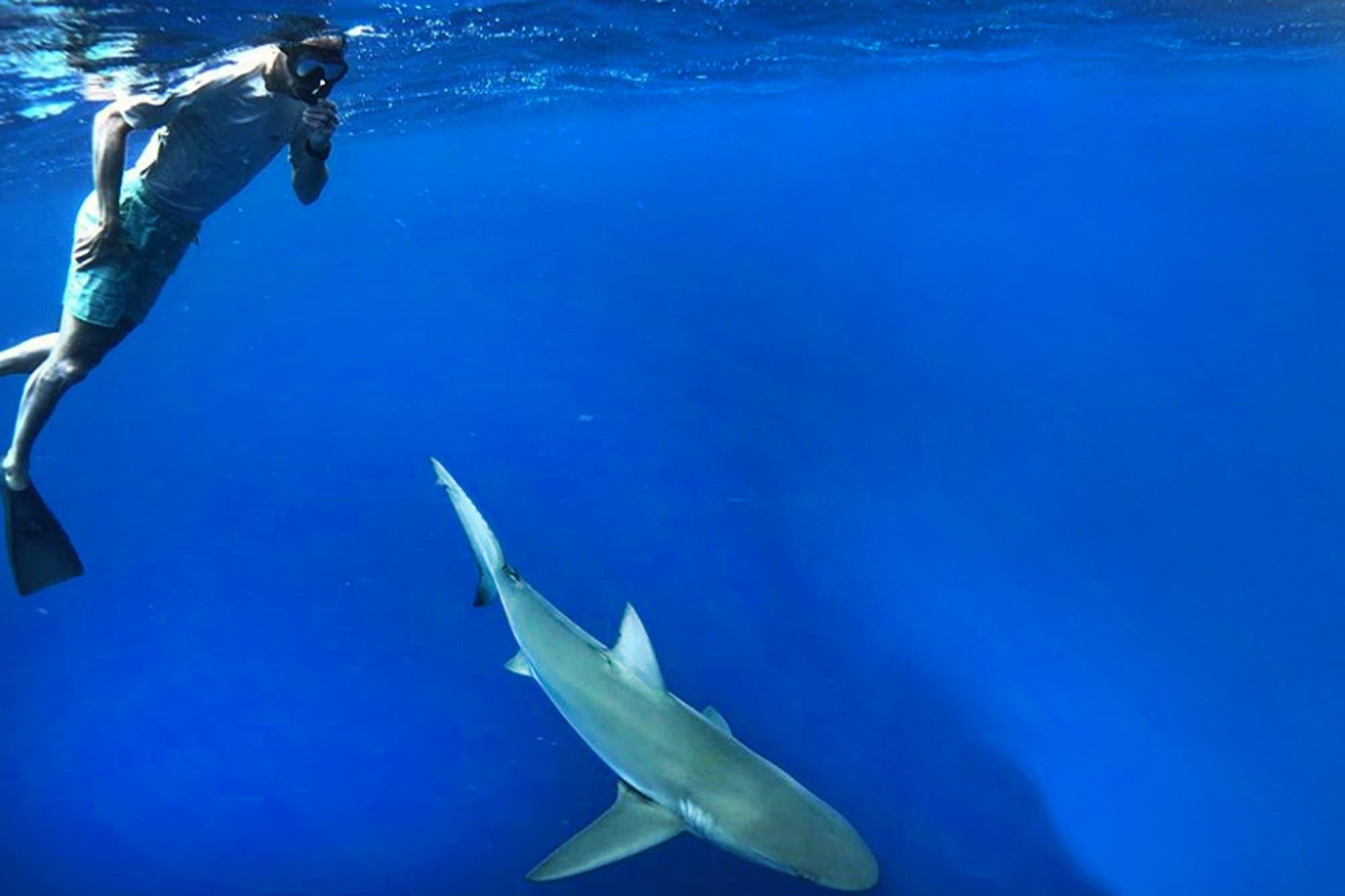 Manu Ginóbili siempre toma riesgos: de cazar murciélagos a nadar con tiburones