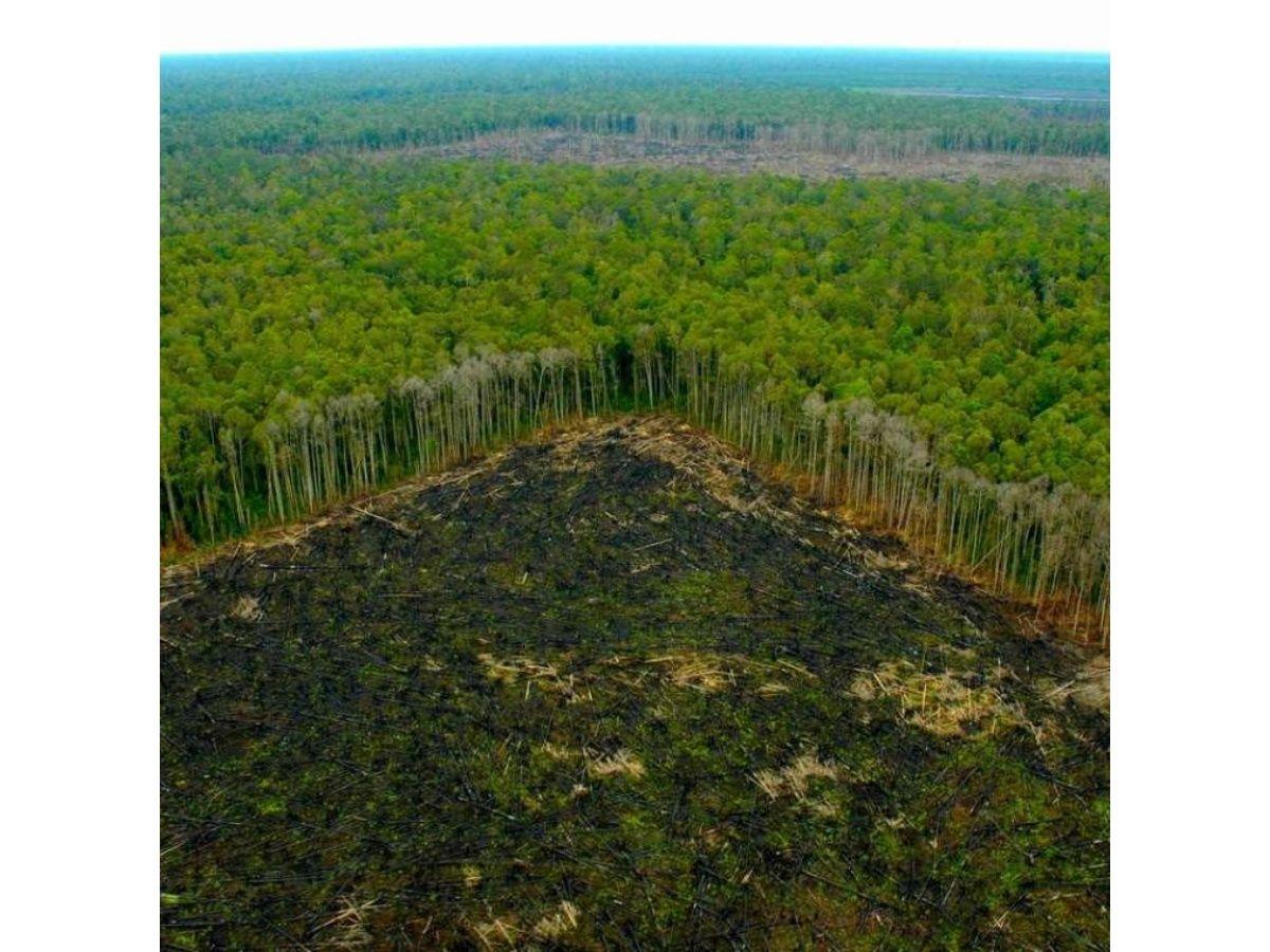 El Papa Francisco, en alerta por la destrucción del Amazonas