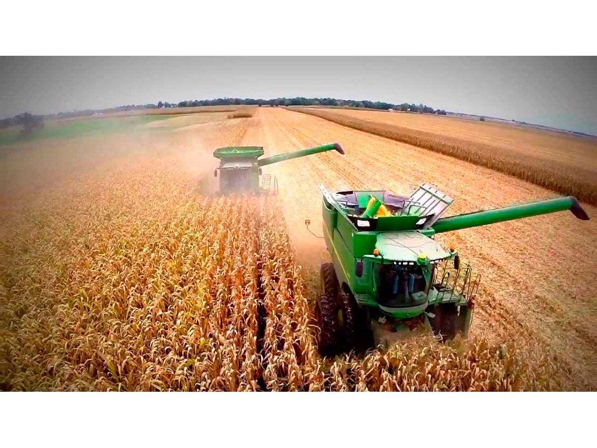 La cosecha de maíz superará a la de la soja por primera vez en 20 años