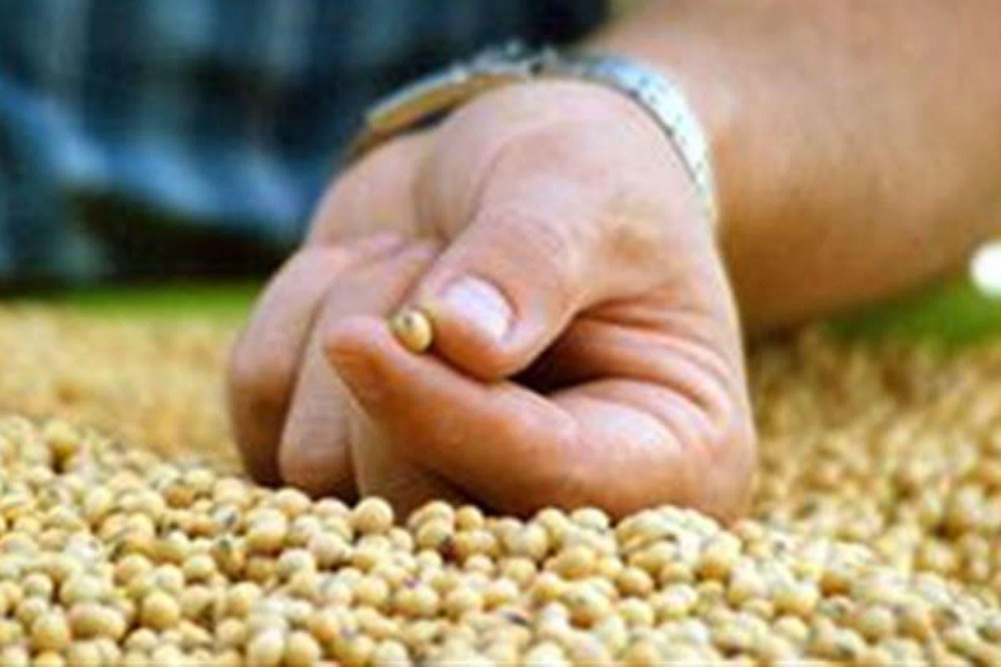 El precio de la soja cayó un 1% en Chicago tras otro mal dato sobre las exportaciones