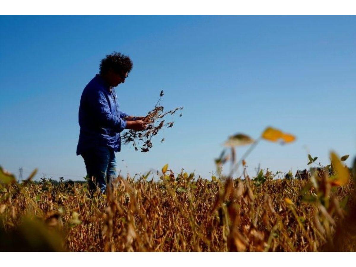 En agosto, agroexportadores liquidaron más de 2 mil millones de dólares