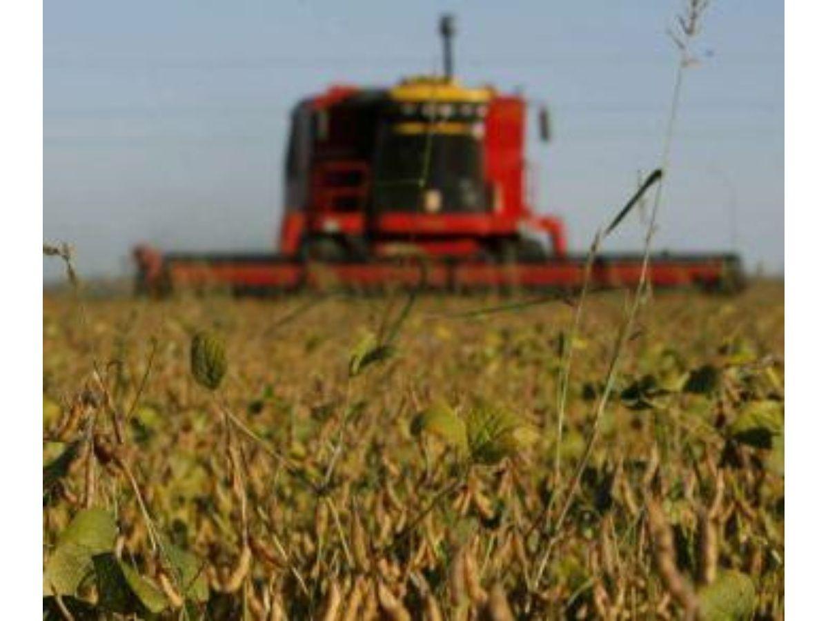 La soja se consolida como el primer complejo exportador
