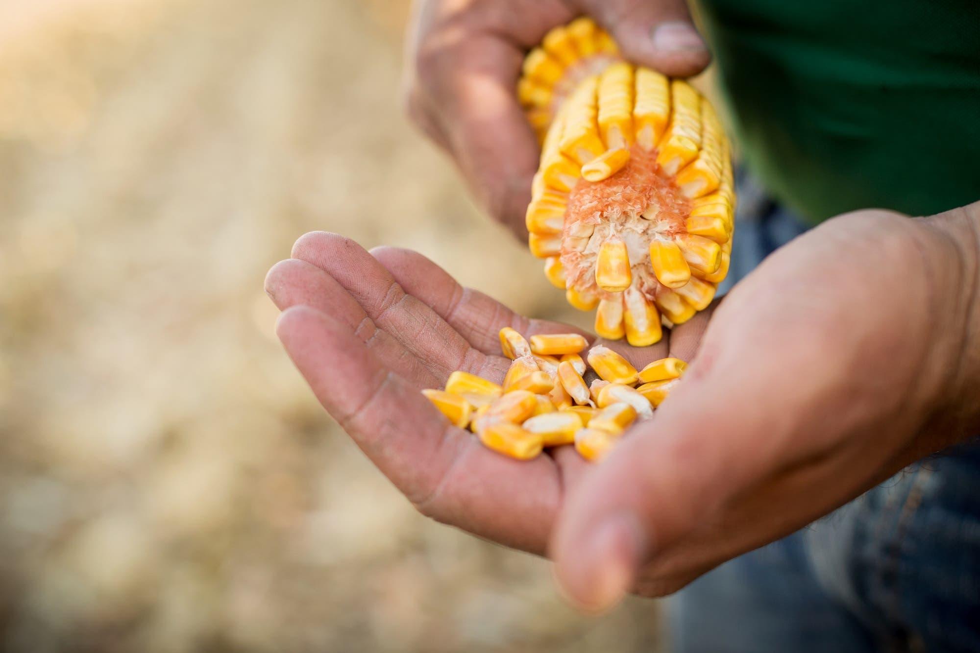 Conocé la historia de Bio4, la empresa argentina que revoluciona la agroindustria