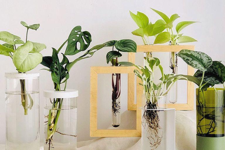 tendencia:-hidroterrarios,-los-nuevos-objetos-de-deseo-para-decorar-con-plantas